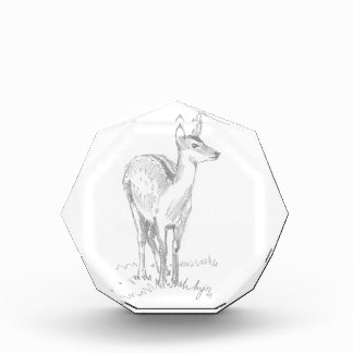 Deer Drawing Award