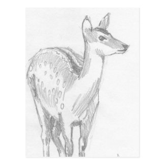 Deer Drawing Postcard