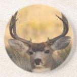 deer drink coaster