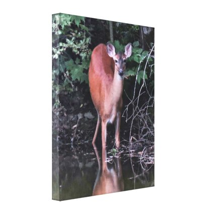 Deer Drinking at the Forest Pond Canvas Print
