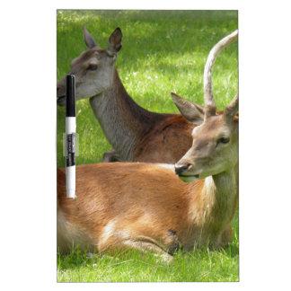 Deer Dry Erase Board