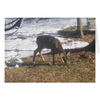 Deer eating greeting card