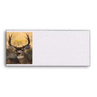 deer envelope