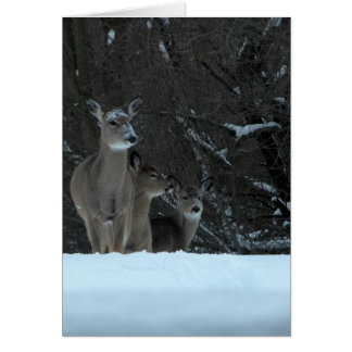 Deer Family Card