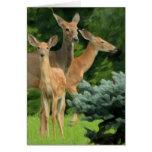 deer family portrait note card