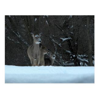 Deer Family Postcard