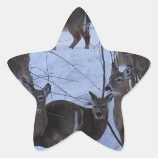 Deer Family Star Sticker