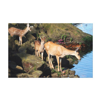 Deer Family with Twin Fawns by the Ocean Canvas Prints