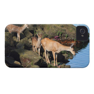 Deer Family with Twin Fawns by the Ocean iPhone 4 Cases