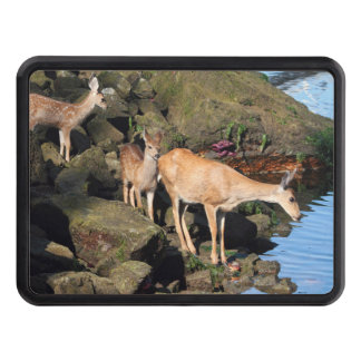 Deer Family with Twin Fawns by the Ocean Tow Hitch Cover