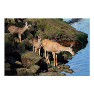 Deer Family with Twin Fawns by the Ocean Posters
