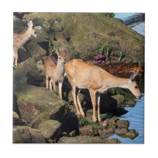 Deer Family with Twin Fawns by the Ocean Ceramic Tile