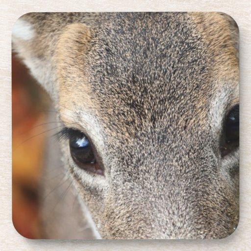 Deer Fawn Closeup Portrait Coasters