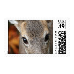 Deer Fawn Closeup Portrait Postage Stamp