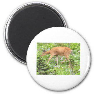 Deer Fawn Flowers Mt Rainier National Park Photo 2 Inch Round Magnet