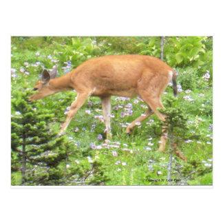Deer Fawn Flowers Mt Rainier National Park Photo Postcards
