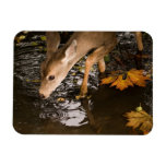 Deer Fawn in a Creek Flexible Magnet