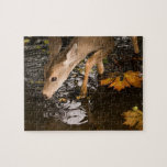 Deer Fawn in a Creek Jigsaw Puzzles