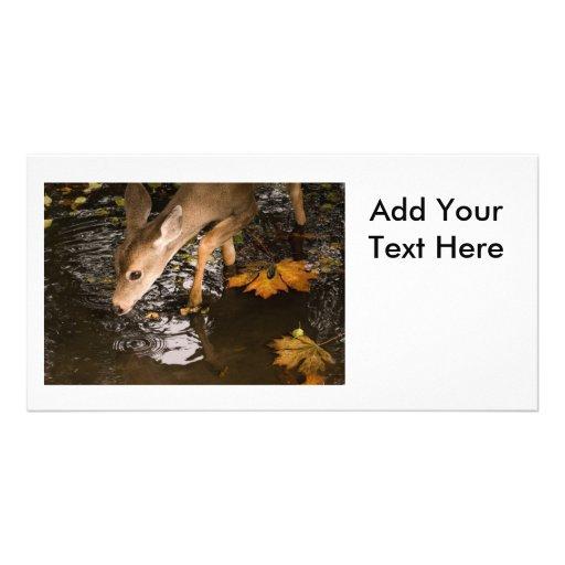 Deer Fawn in a Creek Photo Card