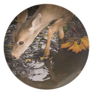Deer Fawn in a Creek Dinner Plate