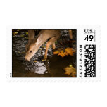 Deer Fawn in a Creek Postage