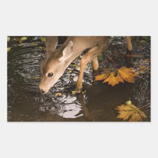 Deer Fawn in a Creek Rectangular Sticker