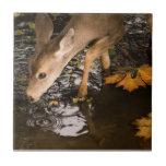Deer Fawn in a Creek Tiles