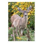 Deer Fawn in Flower Garden Photograph