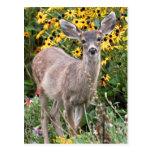 Deer Fawn in Flower Garden Post Card