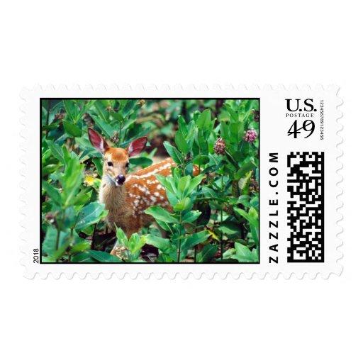 Deer Fawn in Milkweed Postage Stamp
