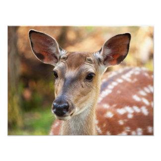 Deer Fawn Portrait Photo Print