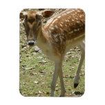 Deer Fawn  Premium Magnet Flexible Magnets