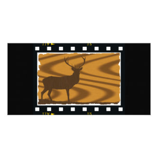 Deer Filmstrip card
