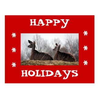 Deer Friend, Happy Holidays Postcard