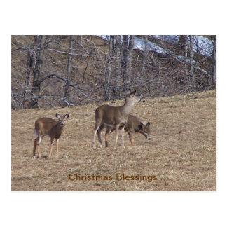 Deer Friends Postcard