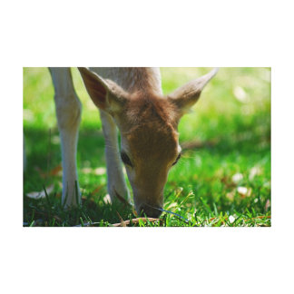 Deer go green gallery wrapped canvas