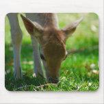 fallow, animals, mammals, photography, wildlife,