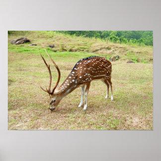 Deer grazing poster