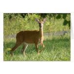 Deer Greeting Cards