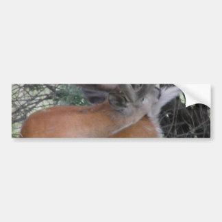 Deer Grooming Tail Bumper Sticker