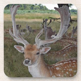 Deer hard plastic coasters