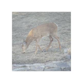 Deer Having Breakfast Gallery Wrap