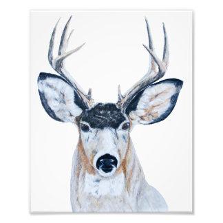 Deer Head in Pencil Photographic Print