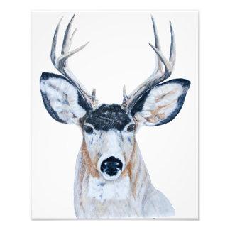 Deer Head in Pencil Photo Print