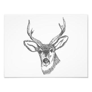Deer Head Sketch Photo Print