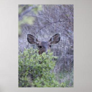 Deer hiding in bushes poster