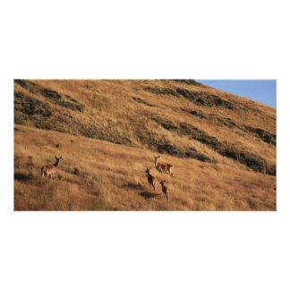 Deer Hill Card