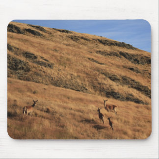 Deer Hill Mouse Pad