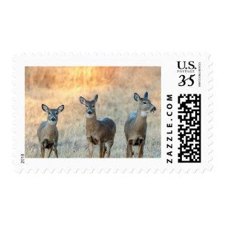 Deer in a field postage