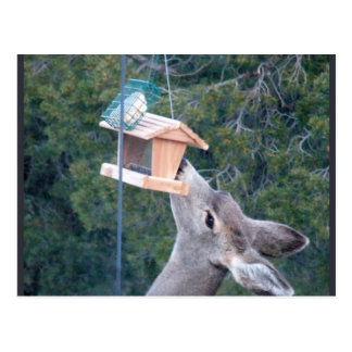 Deer in Bird Feeder Postcard